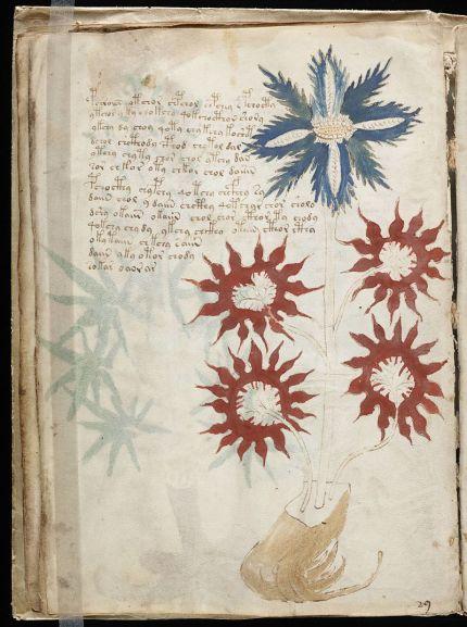 800px-voynich_manuscript_283229