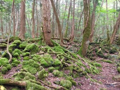 aokigahara-forest-spectacular