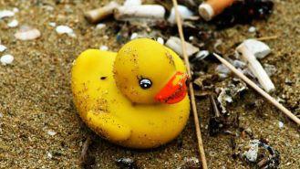 duck.jpg.653x0_q80_crop-smart